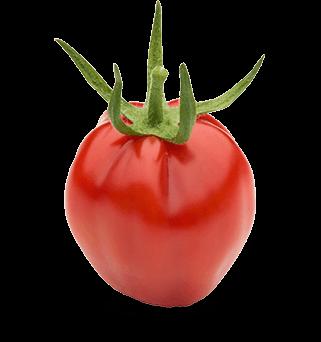 strapcove-paradajky